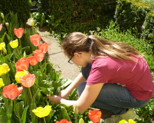 Tulpenbluhend2