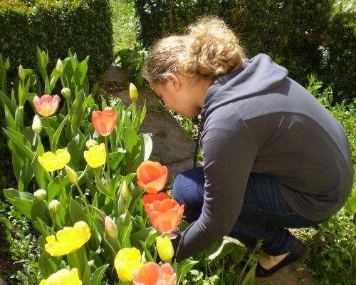 Tulpenbluhend3